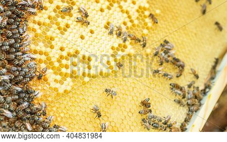 Bees On The Honeycomb, Top View. Honey Cell With Bees. Apiculture. Apiary. Wooden Beehive And Bees.
