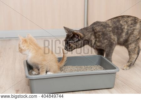The Concept Is A Small Kitten And Ingedish It To The Tray. The Cat Watches The Little Kitten As The