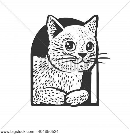 Cat In Cat House Sketch Engraving Vector Illustration. T-shirt Apparel Print Design. Scratch Board I