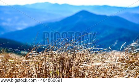 Abstract Natural Background With Pampas Grass Against The Backdrop Of The Blue Sky And Clouds In The
