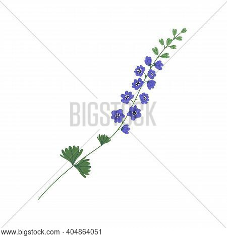 Delicate Delphinium Twig With Violet Flowers Isolated On White Background. Gorgeous Botanical Floral