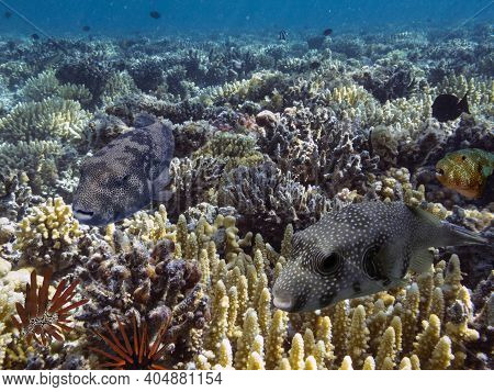 Colorful reef underwater landscape with fishes and corals