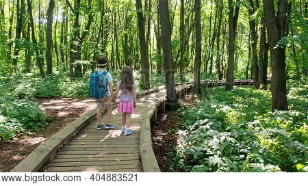 Children Walk In The National Park Along An Equipped Hiking Trail. The Road In The Forest From Woode