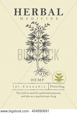 Botanical Illustration Of A Hand-drawn Hemp Plant In Retro Style. Vector Banner, Label Or Packing Fo