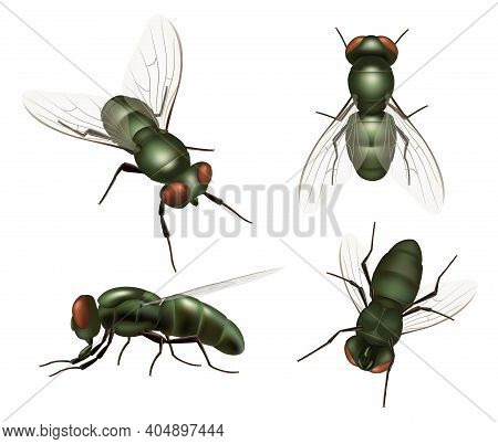Fly Insect. Realistic House Bugs And Mosquito Decent Vector Illustrations Of Fly. Insect Fly Bug, Wi