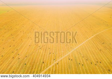 Aerial View Of Autumn Hay Rolls Straw Field Landscape. Haystack, Hay Roll. Natural Agricultural Back