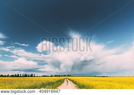 Dramatic Rain Sky With Rain Clouds On Horizon Above Rural Landscape Canola Colza Rapeseed Field. Cou