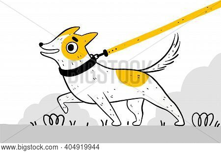 Funny Cute Dog In A Black Collar For A Walk In The Park. The Puppy Pulls The Leash And Does Not Obey