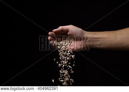 Sunflower Seeds On A Black Background. Seeds Are Falling From A Man\'s Hand. Peeled Sunflower Seeds
