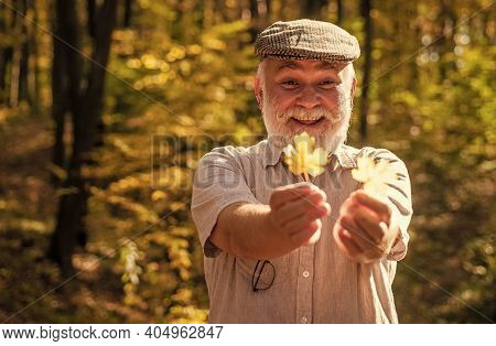 Botanist Examine Herbs. Curiosity To Botany. Explore World Around. Pensioner Hiking In Forest On Sun