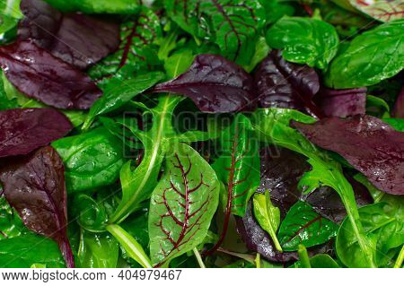 Lettuce Background. Juicy Fresh Green And Red Lettuce Leaves Closeup. Green Leaves Background. Diet,