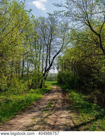 Dirt Road In A Deciduous Forest On A Sunny Day. Spring Season.