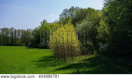 Deciduous Forest And Meadow On A Sunny Day. Spring Season. Ukraine. Europe.
