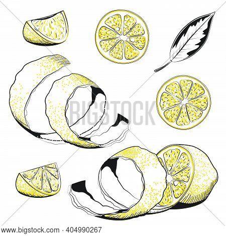 Hand Drawn Vector Illustration - Collections Of Lemons. Lemon, Slice, Leaf, Rind, Peel