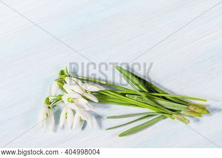 Bouquet of spring snowdrops on a table