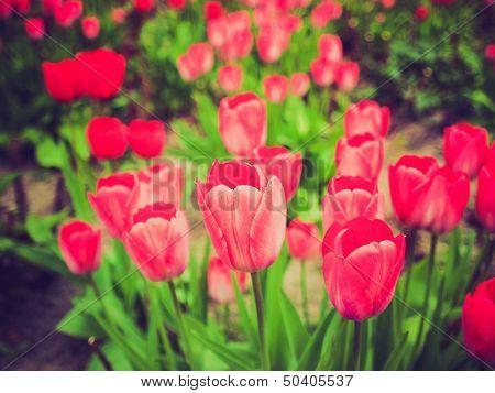 Retro Look Tulips Picture