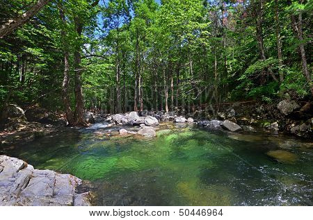 Forest River, Green Water