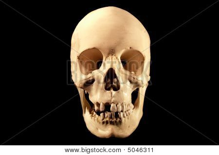 Human Skull On Black, Facing Front