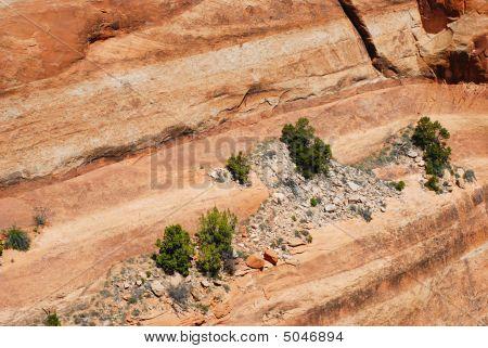 Little Trees Growing From Rock