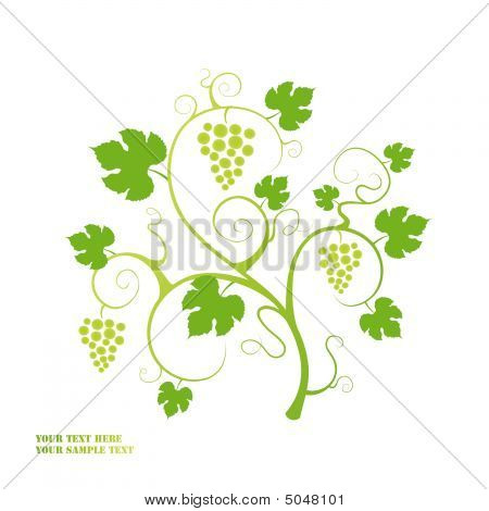 The Grape Vine Background.