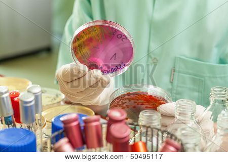 Patri Dish Between Test Tubes