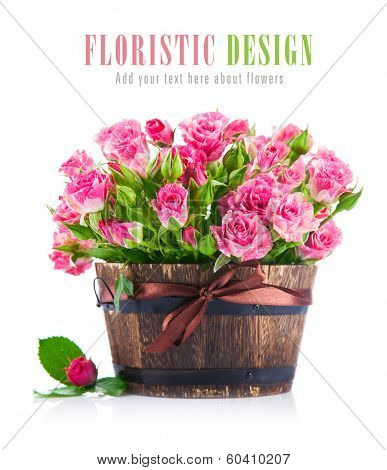 Bunch pink roses in pot. Isolated on white background poster
