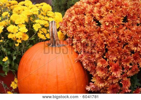 Pumpkin and Fall Flowers