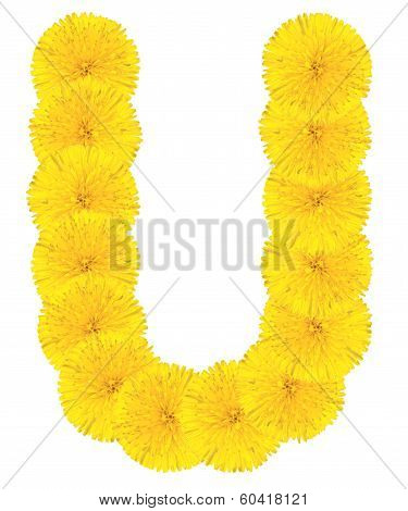 Letter U Made From Dandelions