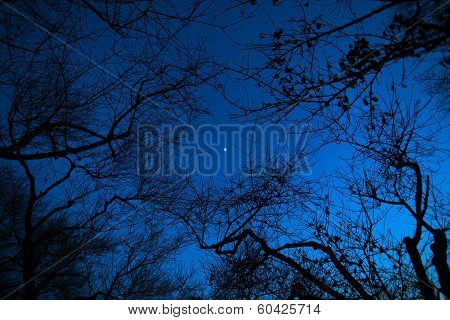 Night moon through the branches of trees