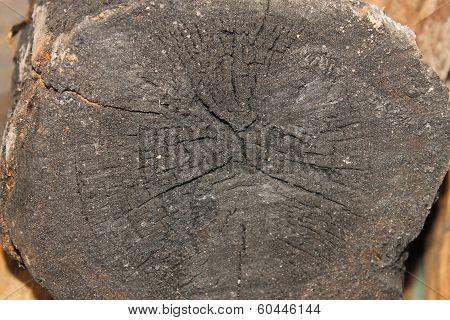 burned tree texture with tree rings stock photo