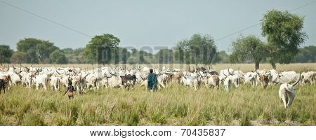 LILIIR, SOUTH SUDAN-DECEMBER 4 2010:Unidentified cattle herders move their cattle in South Sudan