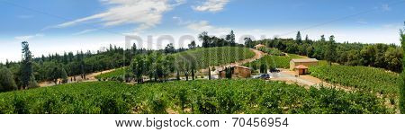 View of vineyards in the Sierra Nevada's foothills of Northern California