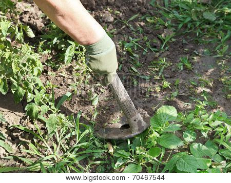 Weeding Grass In Garden By Hoe