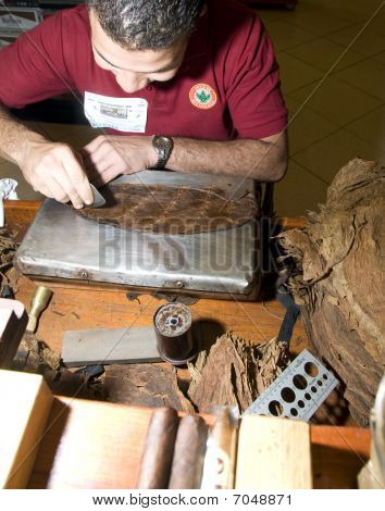 Man Hand Rolling Cigars
