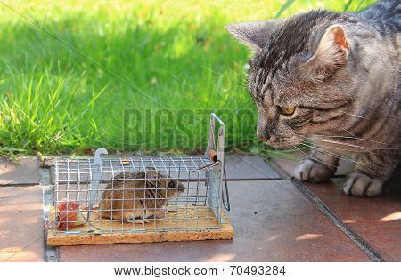 Cat And Captured Mouse, In The Garden