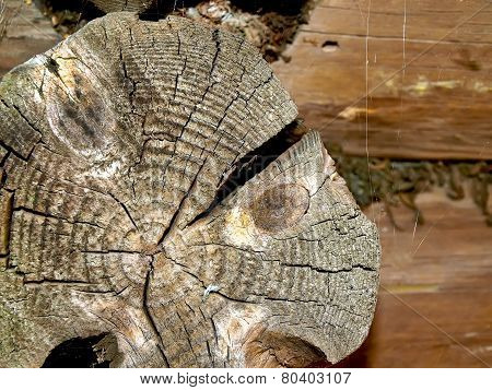 Texture Of The Old Felled Logs With Cracks.