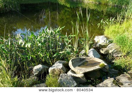 Rocks and Plants by a pond