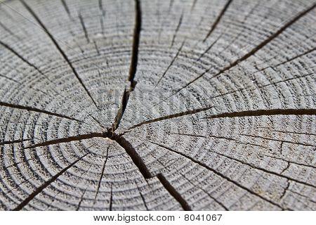Wood Crack