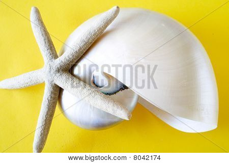 Star Fish and A Sea Shell in Yellow Background