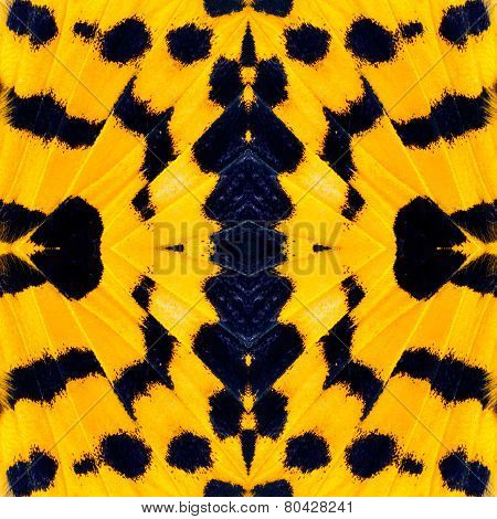 Best of Yellow and Blue Background Pattern made from butterfly's wing texture