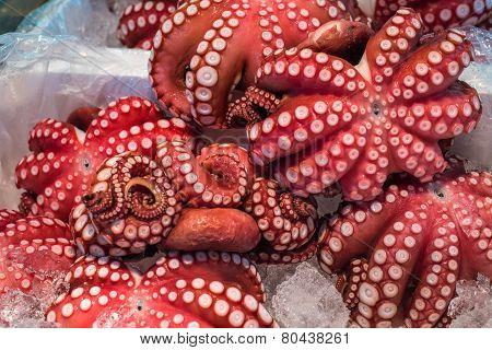 Red Live Octopus At Tsukiji Fish Market, Tokyo, Japan
