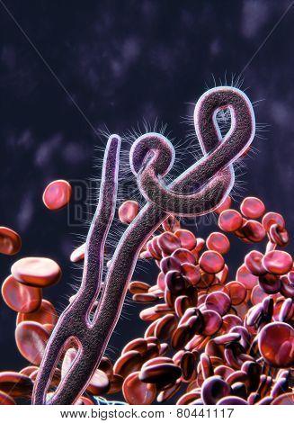 Ebola Virus microscopic view