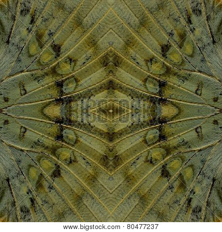 Most Beutiful Of Background Pattern Made Of Great Marquis Butterfly Wing Skin Texture
