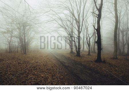 Road trough a haunted forest with fog in autumn