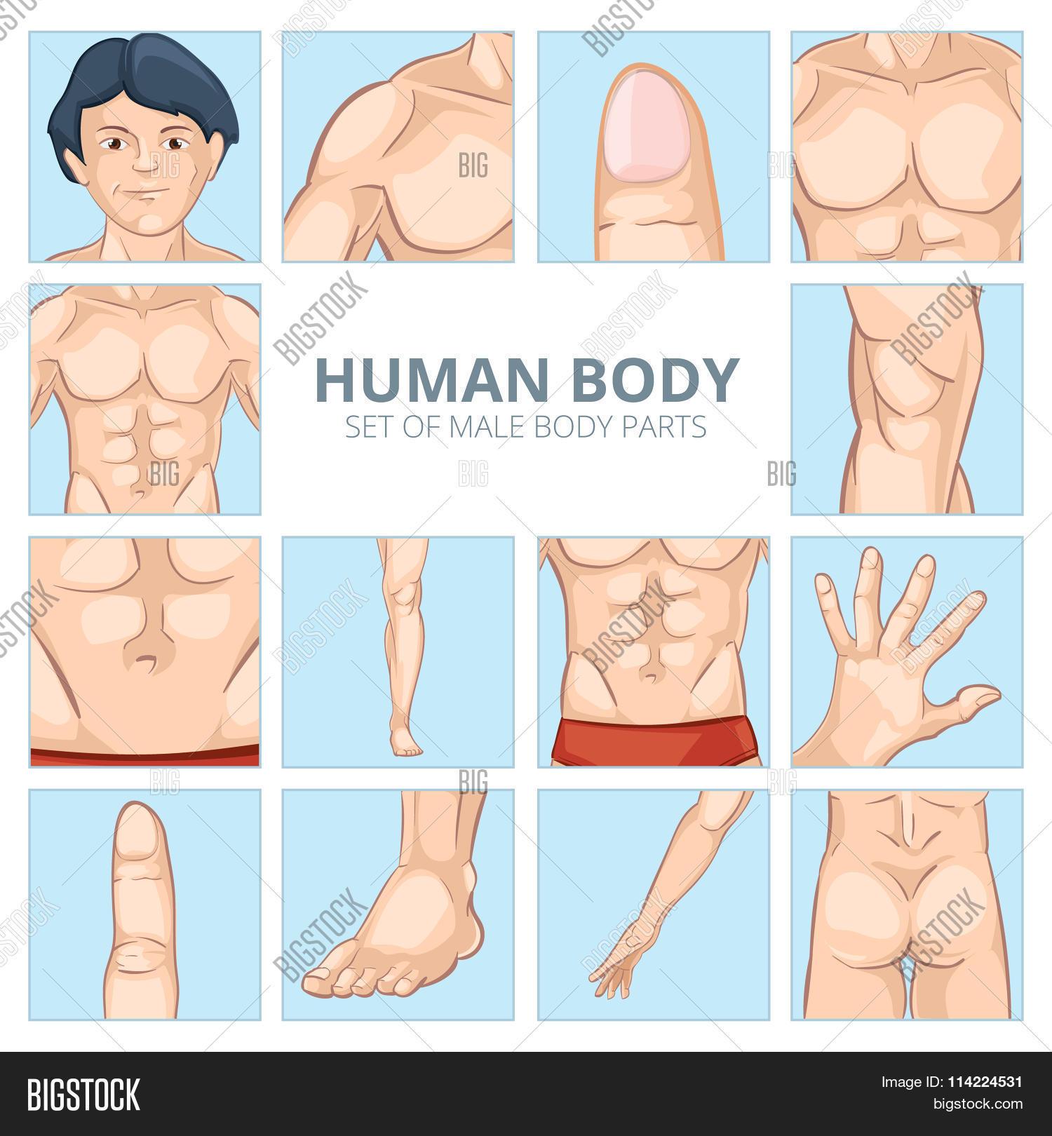 Male Body Parts Vector & Photo (Free Trial) | Bigstock