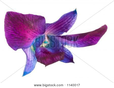 a blue/purple orchid against a white background. poster