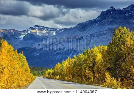 Bright yellow aspen and birch beside the road.  Majestic mountains and glaciers on the background of cloudy sky. Canadian Rockies, Banff National Park in the autumn