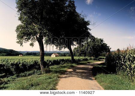 Vineyards Maize Lot Valley France