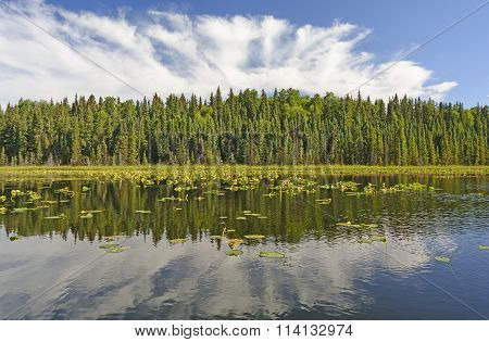 Sunny Reflections On A Wilderness Lake