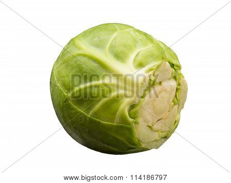Single brussels sprouts isolated